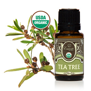 Essential Oil: Tea Tree 15ml